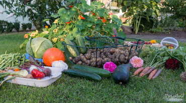 Featured image - Getting Our Vegetable Garden Prepared for Winter