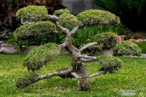 Items Needed To Grow The Tree Like A Bonsai Plant