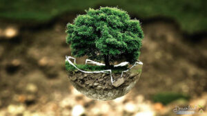 Mini Bonsai Tree So Tiny It Fits Within The Tiniest Space