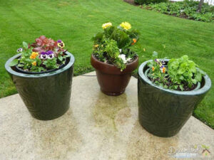Container Gardening & Front Yard Lanscaping: 5 Tips For Container Gardening