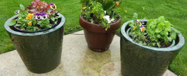 Featured of 5 Tips for Container Gardening
