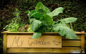 Introduction to Vegetable Garden: We Are Loving Vegetable Gardening, Let's Start Planting Your First Garden