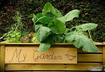 Featured of We Are Loving Vegetable Gardening, Let's Start Planting Your First Garden