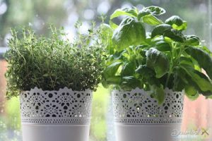 Herb Gardening With Your Own Container Garden