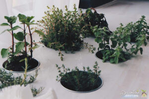 Home Herb Garden Benefits: Growing More Herbs Indoors As Well As Some Vegetables in Winter