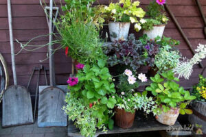 Home Gardening Tips: Where To Start Your First Home Garden