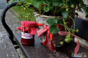 Container Gardening Strawberries Potted Plants: How to Grow Strawberries in Pots