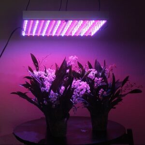 Can The Correct Led Grow Lights Increase Plant Resin Production?