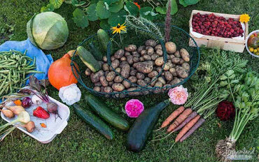 Featured image - How to Start a Garden - Small Vegetable Garden