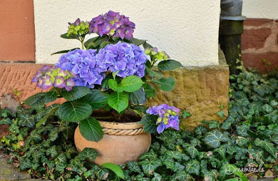 Automatic Potted Plants Watering System : Keep the Greenery on Your Patio Green – Even When You are Away