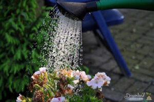 Spring Flowers: The Best Time to Water Plants and Flower Garden – Perennial Flowers