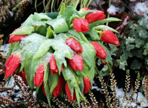 House Plants: Protecting Plants From Frost, Storing Plants Outdoors During the Winter