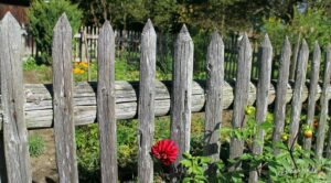 Current Garden Trends That Seems to be Popular This Year