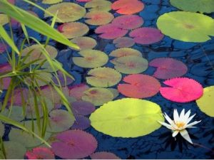 No Money? How to Make a Small Garden Pond Without a Great Expense