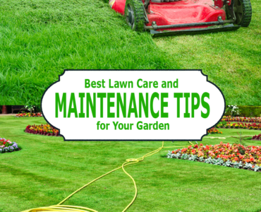 Featured of Best Lawn Care Tips and Lawn Maintenance Tips for Your Garden