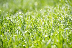 img Feeding Your Lawn Regularly - How to Maintain Lawn in Summer