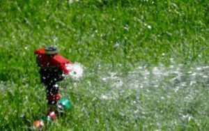 img Watering Your Lawn Regularly - How to Maintain Lawn in Summer