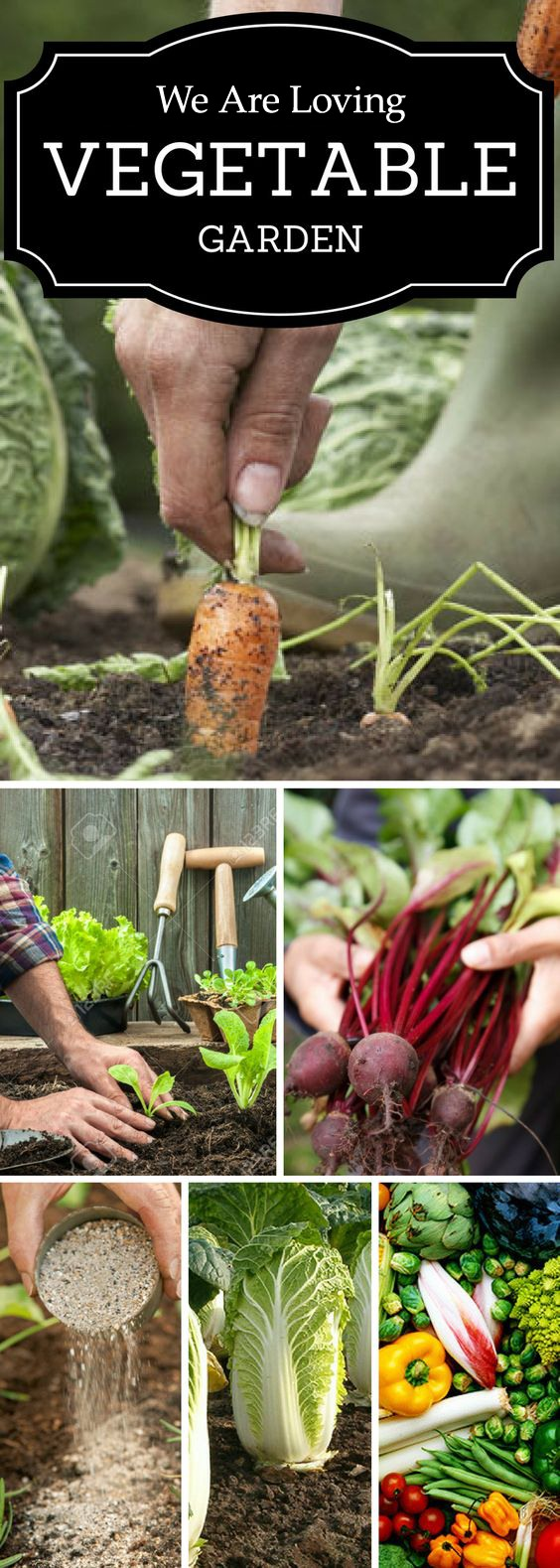 We Are Loving Vegetable Gardening, Let's Start Planting Your First Garden