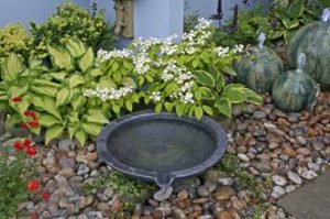 Perfect Backyard: Key Steps on How To Prepare The Land For a Backyard Water Features