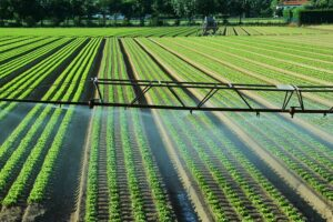 How to Lay and Install Drip Irrigation for your Garden