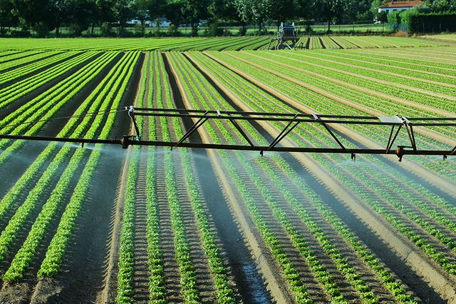IMG - How to Lay and Install Drip Irrigation System for your Garden