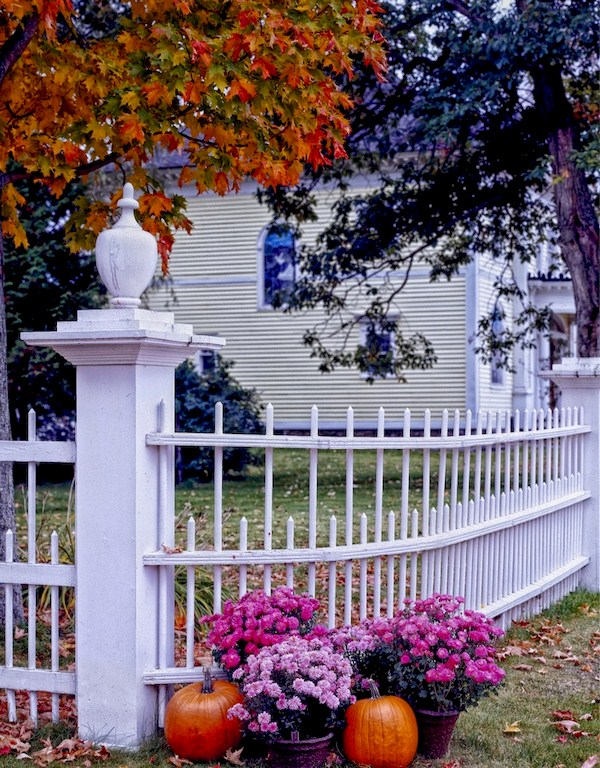 Tree Fence Plant, House, Leaf, Fall (Creating Homemade Fall Lawn Decorations: Outside Fall Decorations)