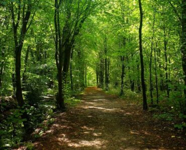 The Environmental Benefits of Keeping Trees Healthy
