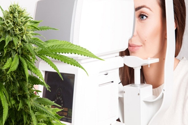 Good for Treating Glaucoma - Health Benefits for Growing Marijuana in Your Garden