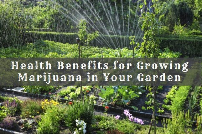 Health Benefits for Growing Marijuana in Your Garden