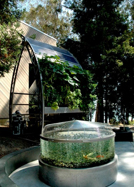 Aquaponic Gardening - Landscaping Tips to Maximise a Small Backyard
