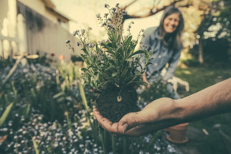 Plan Your Perfect Garden