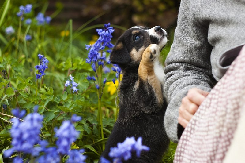 Consider Pets when You Draw a Plan for Your Perfect Garden