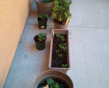 Featured of Herb Gardening With Your Own Container Garden
