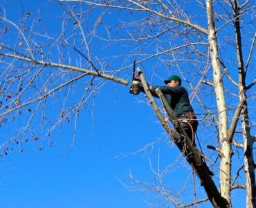 Featured of 5 Tree Pruning Mistakes to Avoid