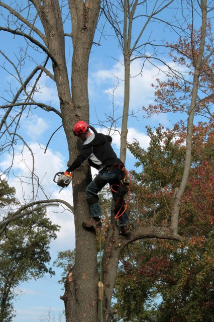 5 Tree Pruning Mistakes to Avoid • Dream Lands Design