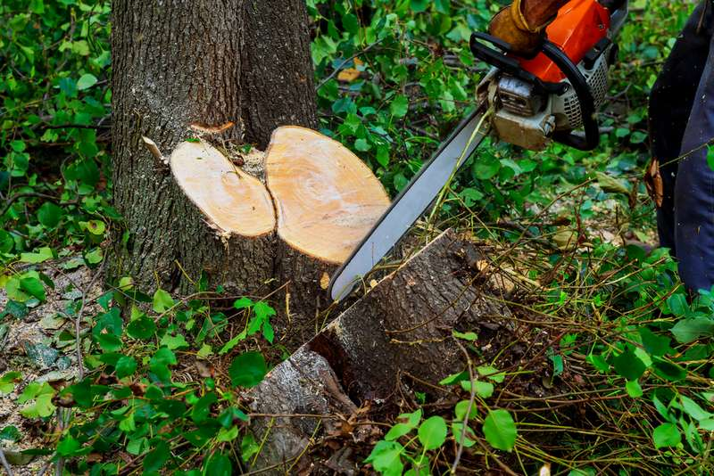 Tree Removal - Get a Detailed Knowledge of Tree Removal