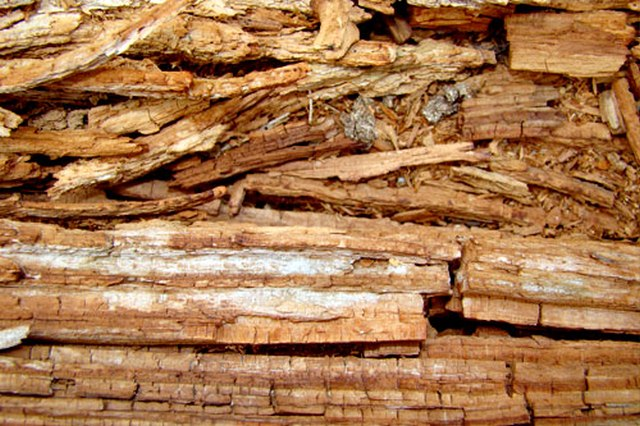 Rotted Wood