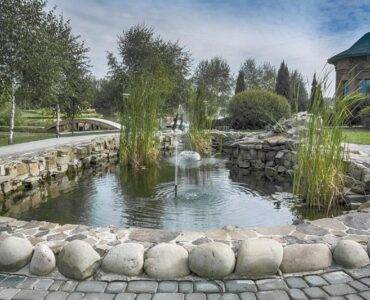 Featured of 4 Low-Maintenance Fish to Add to Your Outdoor Fountain