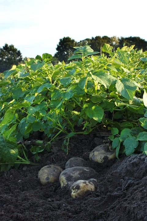 A Bird's Eye View of Issues in Potato Farming