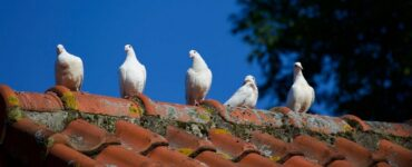 Featured of 5 Signs That Will Tell You It's Time to Repair Your Roof