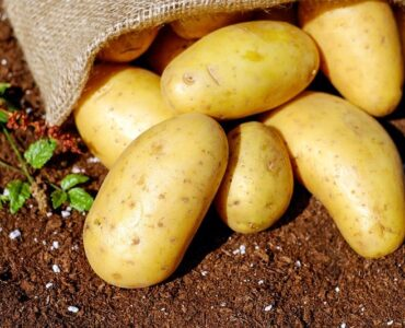 Featured of Helpful Tips for Better Potato Farming