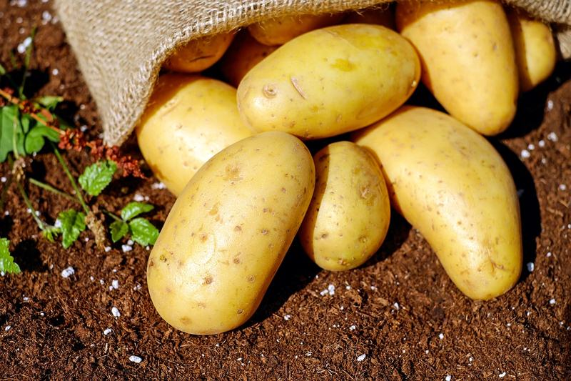 Helpful Tips for Better Potato Farming
