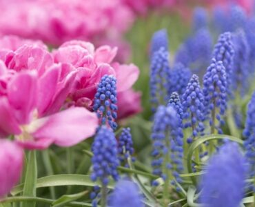 Featured of How to Create an All-Season Flower Garden?