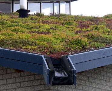 Featured of How to Turn Your Rooftop Into a Green Garden