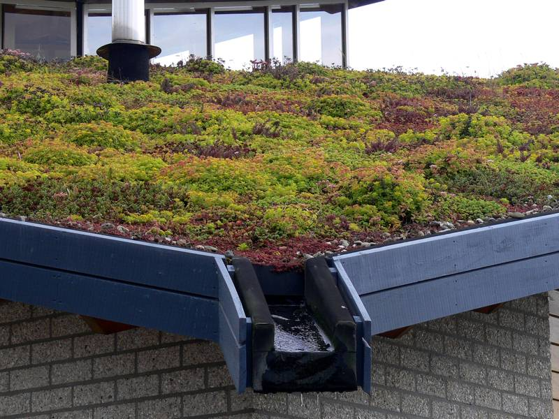 How to Turn Your Rooftop Into a Green Garden