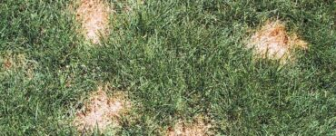 Featured of Diagnosing and Managing Brown Spots on Your Lawn