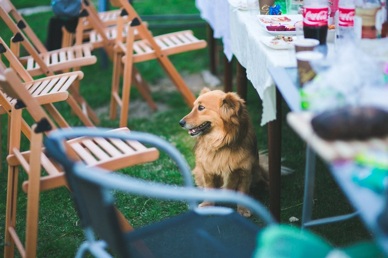Garden Party - 5 Tips for an Amazing Outdoor Space