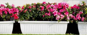 Featured of The Various Kinds of Planter Boxes to Create an Appealing Landscape