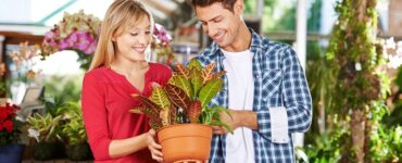 Featured of Tips to Choose a Reputable Plant Nursery and to Buy Plants