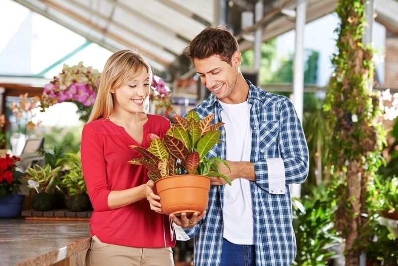 Tips to Choose a Reputable Plant Nursery and to Buy Plants